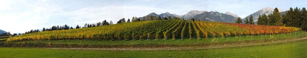weinberg Tirol